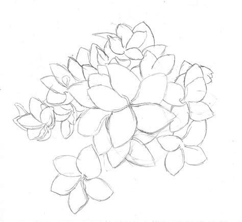 plumeria pulmeria flower drawing by gibeltilge on deviantart
