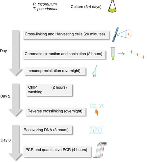 outline of the chip qpcr protocol timing for each step is - Chip Qpcr Protocol