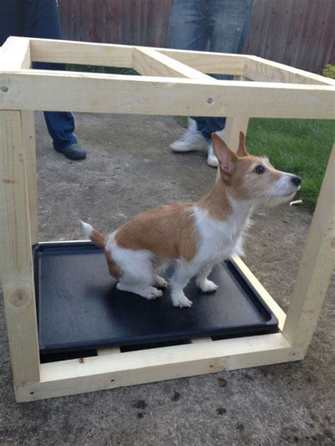 how to make dog houses how to make a dog house from scratch 13 pics izismile com
