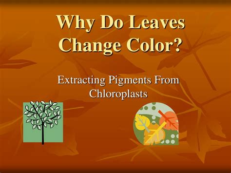 how do leaves change color ppt why do leaves change color powerpoint presentation