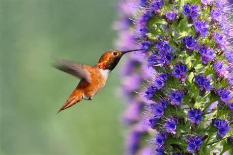 imagenes de flores que parecen animales atrae p 225 jaros y mariposas al jard 237 n