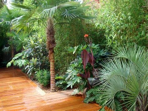 tropical planting scheme 17 best ideas about garden on small