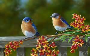wallpaper of birds colorful birds wallpapers first hd wallpapers