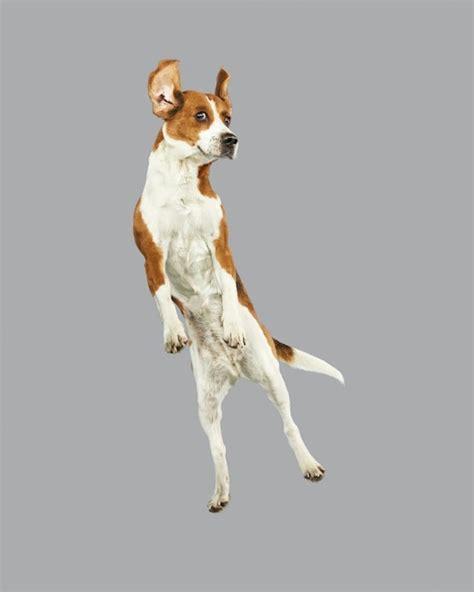 puppy jumping jumping dogs series 7 fubiz media