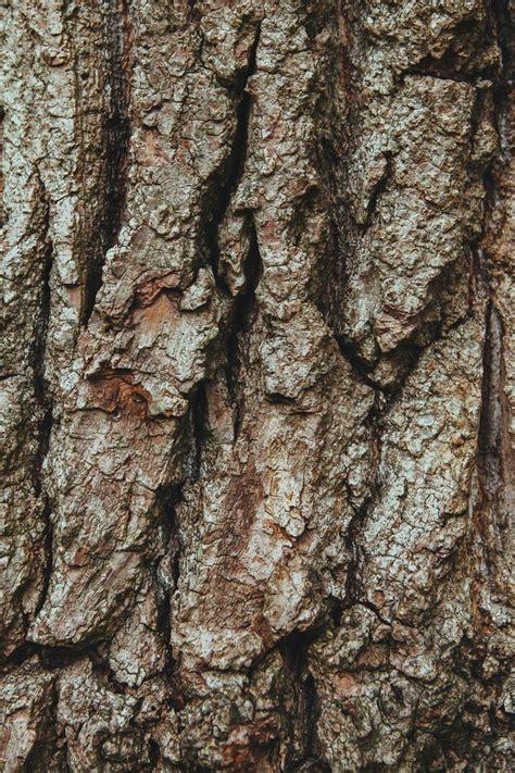 oak tree woodworking best 25 oak tree bark ideas on tree bark