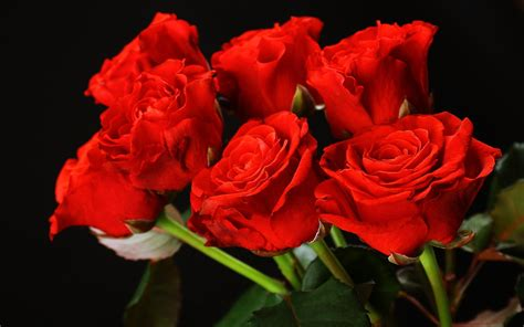 wallpaper couple with rose couple rose driverlayer search engine