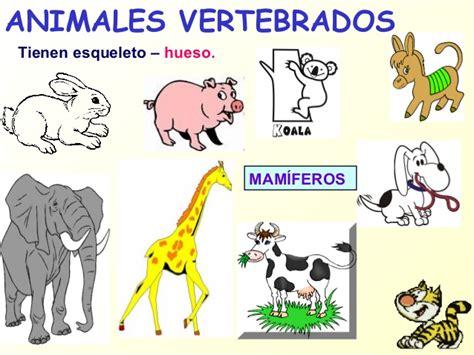 los animales vertebrados animales vertebrados e invertebrados cristyna