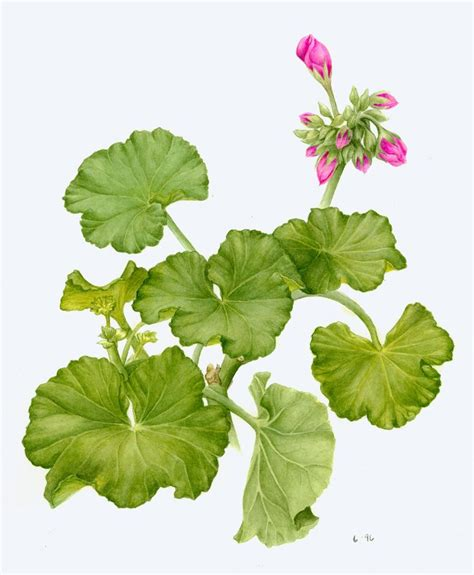libro botanical painting in gouache botanical art exhibit at bloedel reserve this month and next places to visit