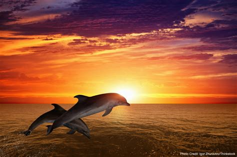 boat cruise fort myers will you see dolphins on a fort myers sunset cruise sun