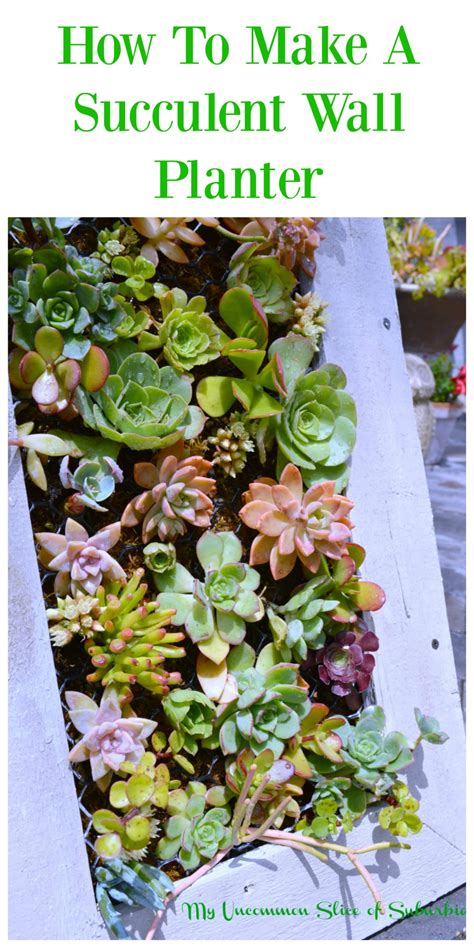 Diy Hanging Succulent Planter My Uncommon Slice Of Suburbia How To Make A Succulent Wall Garden