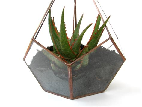 large succulent planter large succulent planter large terrarium hanging
