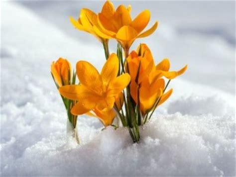 Imagenes Flores Invierno | fotos de flores de invierno