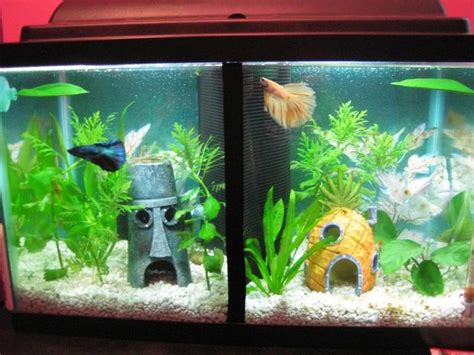 betta tank 17 best ideas about betta tank on betta fish