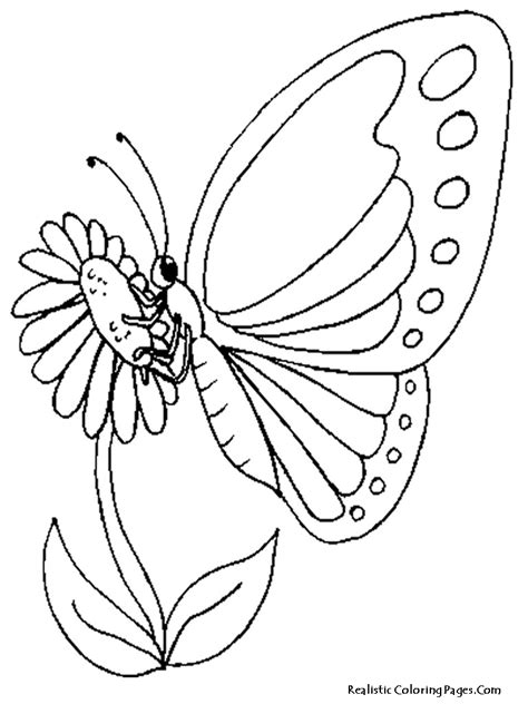 realistic butterfly coloring pages realistic butterfly coloring pages realistic coloring pages