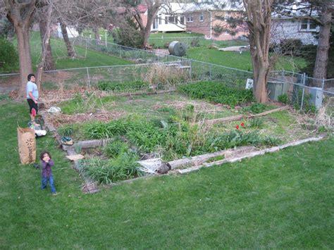 backyard full of weeds old garden full of weeds and ditch lilies helpfulgardener com
