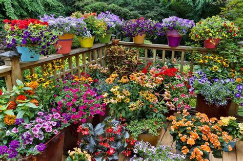 ideas  flowering container gardens