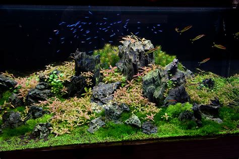 Lu Aquascape 575 liter iwagumi layout by oliver knott photo oliver