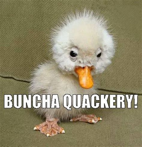 Funny Bird Memes - is that a platapus image 4216755 by helena888 on favim com