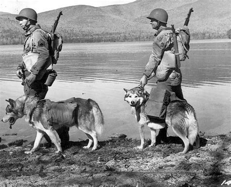 war dogs 2 17 best dogs in world war ii images on dogs world and