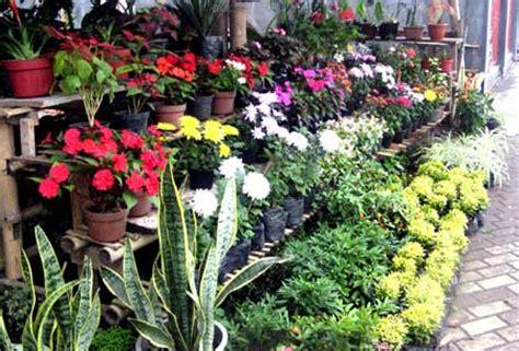 artikel jenis tanaman hias rdesipermatasari