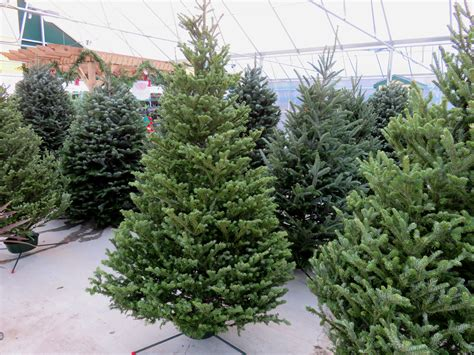 christmas tree delivery dallas trees free delivery covingtons
