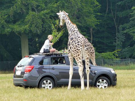 best safari park image gallery safaripark