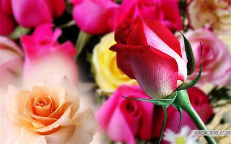 wallpaper flower mix beautiful free original flower desktop wallpaper tropical