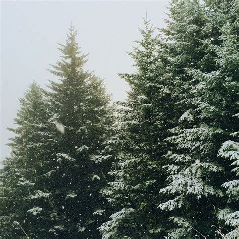 5 lovely christmas tree farms in missouri that are perfect