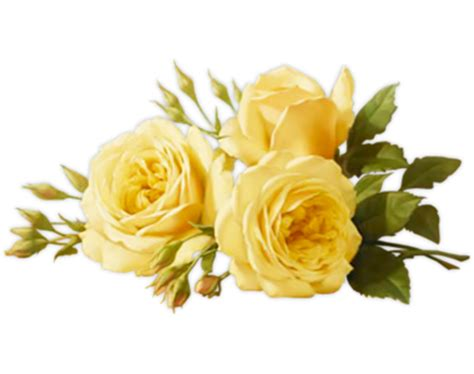 Vase For Plants Yellow Roses Transparent Background Flowers Free Png Images