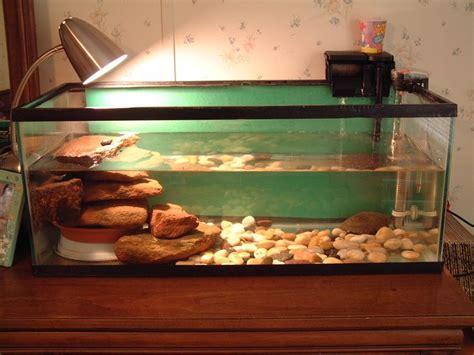 aquarium habitat design turtle tank here is a picture of wendy s turtle tank