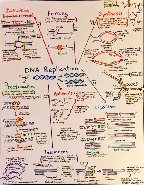 dna replication flowchart flowchart drawings and dna on