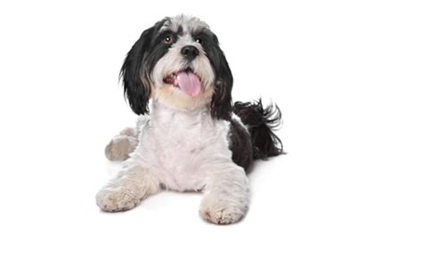 grooming nc pet grooming services at grateful pets professional pet grooming