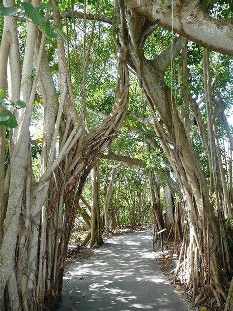 Sarasota Botanical Gardens Bob S Photo Album