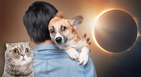 dogs and solar eclipse be careful with your pets during the solar eclipse plus 6 shocking eclipse facts