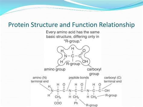 n protein function ppt introduction to studying proteins powerpoint