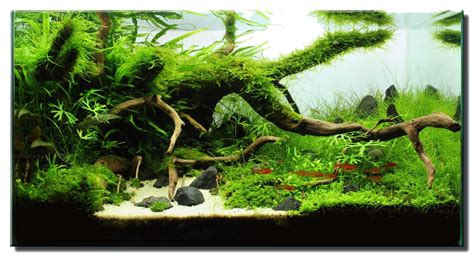 how to aquascape aquascape of the month july 2012 quot the only way