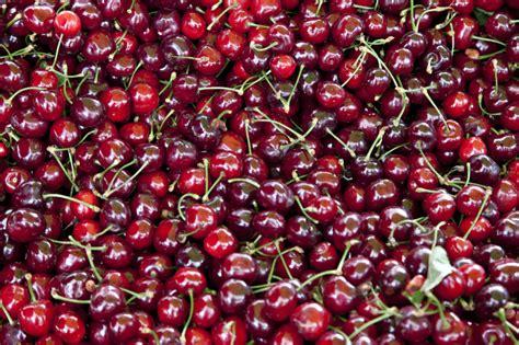 colored cherries colored cherries colored cherries request bright
