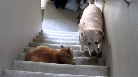 cat scares dog on couch dog afraid of cat youtube