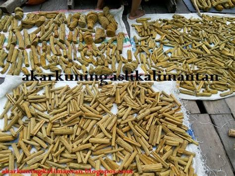 Tongkat Ali Alami Curah Bubuk akar kuning obat herbal penyembuh liver hepatitis diabetes pasak bumi tongkat ali