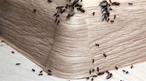 Was Hilft Gegen Ameisen Auf Der Terrasse 3700 by Viele Ameisen Auf Terrasse Im Haus 187 A S S Gmbh Hilft