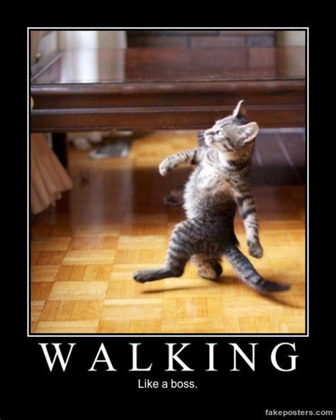 When You Walking Cat Meme