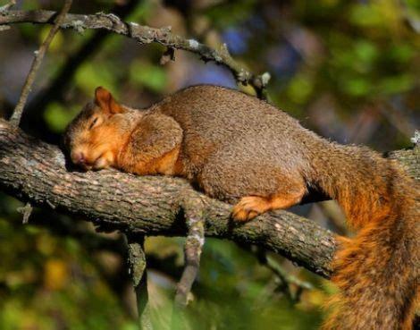 imagenes animales durmiendo animales durmiendo 3 taringa