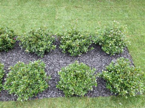 pulizia giardini pulizia di linee midorigiardini