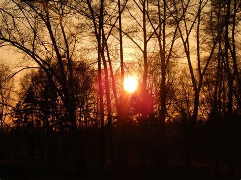 kostenlose foto baum natur wald ast licht stra 223 e sonnenlicht blatt blume gr 252 n kurve kostenlose foto baum natur wald ast licht sonne sonnenaufgang sonnenuntergang nebel