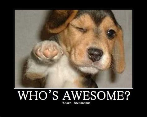Awesome Memes - image 66552 who s awesome you re awesome sos