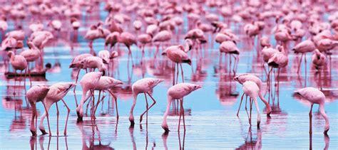 wallpaper flamingo flamingo wallpapers wallpaper cave