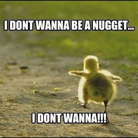 Nuget Cutel quotes and sayings about chicken quotesgram