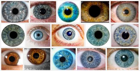 all possible eye colors eye color how it develops why