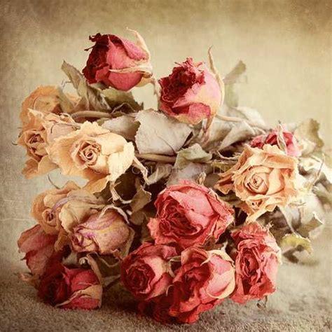 imagenes bonitas de amor vintage zoom frases imagenes de flores vintage