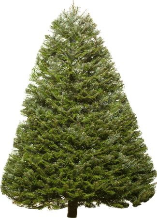 meadow fir 10 christmas tree images different types of trees with pictures and descriptions
